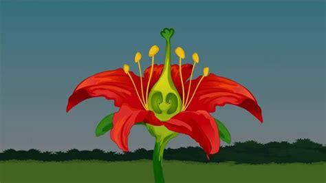 bagian bagian bunga beserta fungsi  gambarnya lengkap