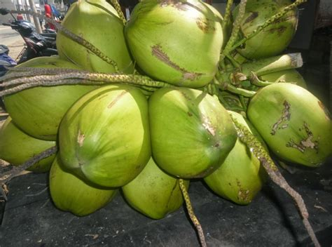 Minyak Kelapa Curah Terbaru 10 manfaat kelapa terbaru manfaat bagus