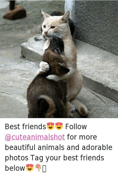 Cute Best Friend Memes - 25 best memes about cute animals best friend animals
