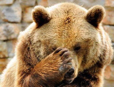 what is bear pepper spray? bear pepper spray   howstuffworks
