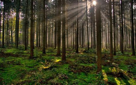imagenes de bosques verdes cu 225 les son los beneficios ambientales de los bosques