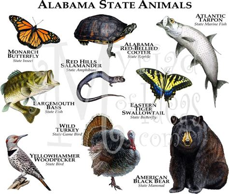 igbo names for animals west africa animal 52 best images about usa state animals t shirts on