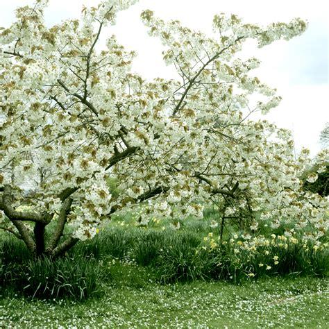 A Partir De Quand Planter Les échalotes by Quand Planter 1 Cerisier