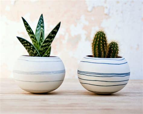 cactus para interior decoraci 243 n con cactus para el interior y el exterior de casa