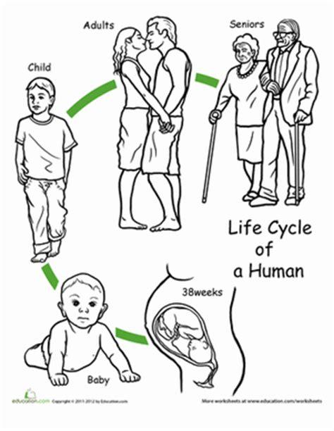printable animal life cycles color the life cycle human worksheet education com