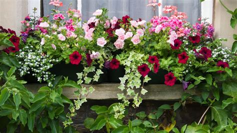 Annuals For Planters by Top 7 Flowering Container Garden Plants For Spots