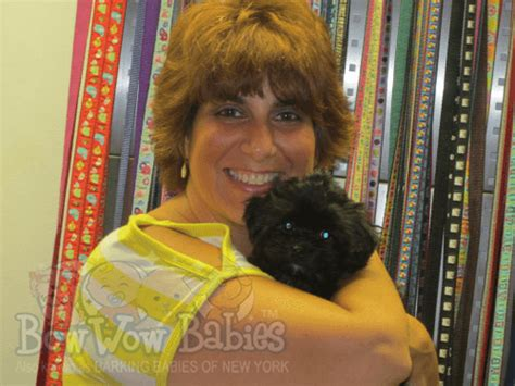 puppy store huntington bowwow babies 174 happy customers bowwow babies 174