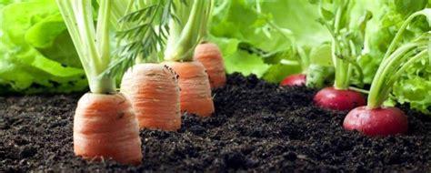 perbedaan sayur hidroponik  organik pak tani digital