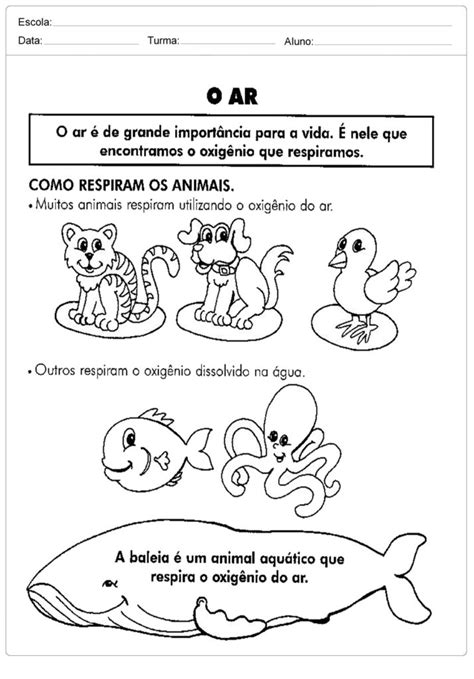 Atividades Meio Ambiente - 1º e 2º ano - Para Imprimir