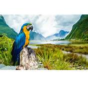 Most Beautiful Parrot HD Wallpapers  Pictures