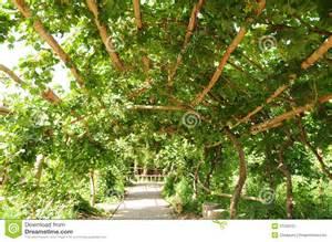 Backyard Grape Trellis Design De Pergola Van De Druif Stock Afbeelding Afbeelding