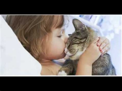 8 Ways Your Cat Shows It You by The 10 Ways Your Cat Shows You Cat