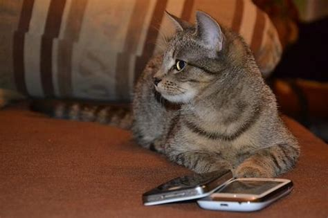 fit fido: 10 apps to keep pets healthy informationweek