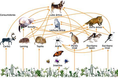 cadenas troficas ejemplos terrestre cadena alimenticia de los ecosistemas terrestre de