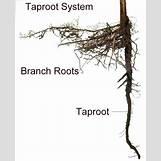 Xylem And Phloem Tree Diagram | 654 x 805 gif 106kB
