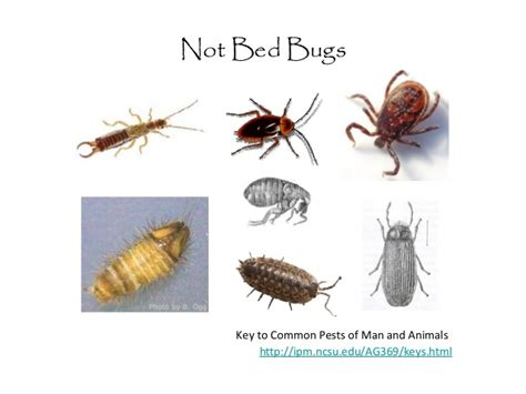 i found a bed bug now what bed bugs in schools