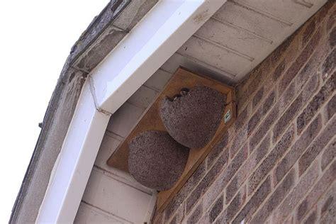 house martin nest box plans house design plans