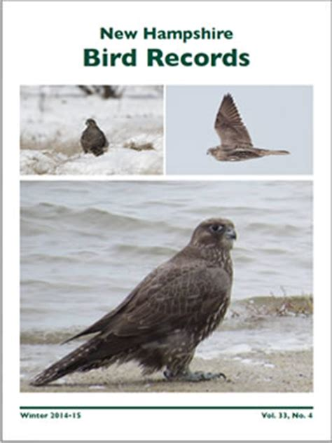 new hshire bird records 187 current issue of new