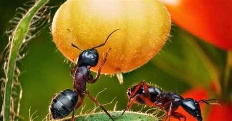 Ant In Vegetable Garden Vegetable Gardening With Mike The Gardener Get Rid Of
