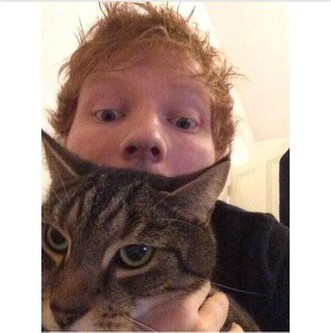 ed sheeran cats ed and graham haha oh poor graham looks like he s