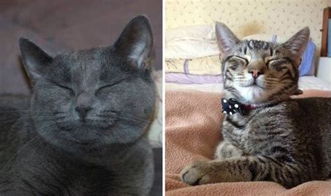 The Smile Of The Cat cat charity warns cat owners what clues to look for to