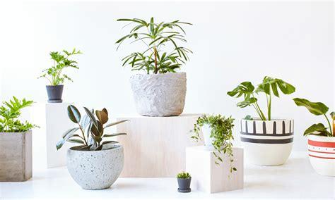 modern plants indoor demand for indoor plants in modern world