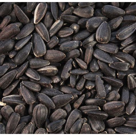 is black sunflower seeds for birds black sunflower seeds