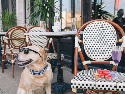 restaurants that allow dogs 60 great friendly restaurants and bars in chicago 2017 edition eater chicago