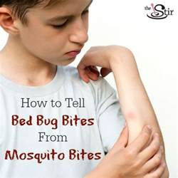 baby bed bug bites mosquito bites vs bed bug bites how to tell the