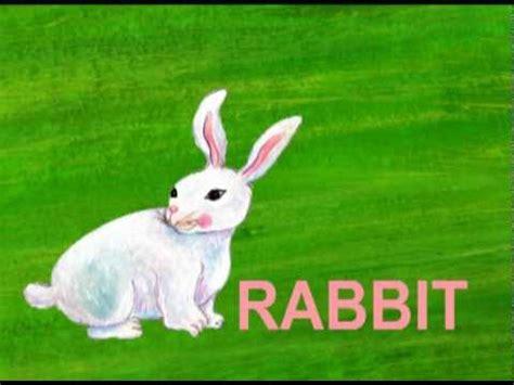 R Rabbit letter quot r quot quot r quot is for rabbit