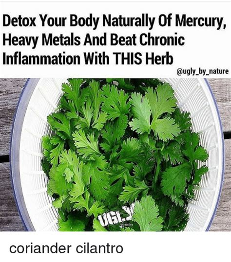 How To Detox Mercury From The Naturally by Detox Your Naturally Of Mercury Heavy Metals And Beat