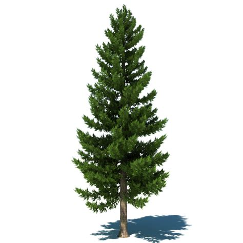 image of tree 3dsmax pine tree