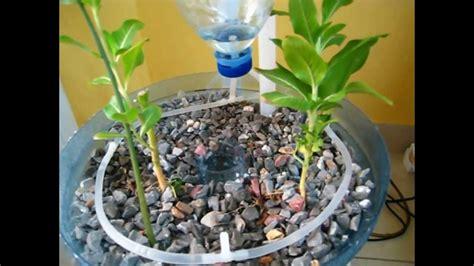 pet bottle aquaponics system  beginner   video