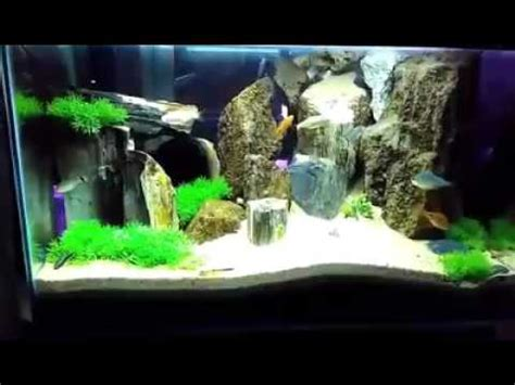 Lu Aquarium Ikan Hias tips budidaya ikan hias akuarium terbaru