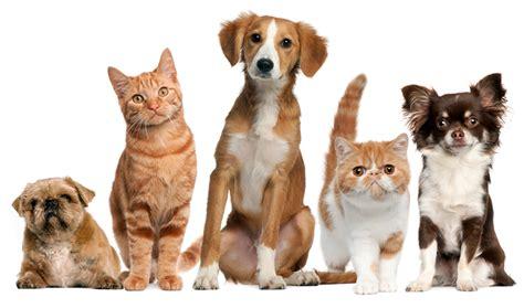 E Para Adocao From The Adoptable Pets Photo Pool by Nomes Para Pet Shop Como Escolher Do Jeito Certo