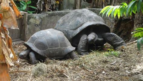 tartarughe in giardino tartarughe nel giardino foto di bernique guest house