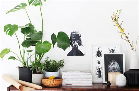 super cute indoor plants  buy  brisbane