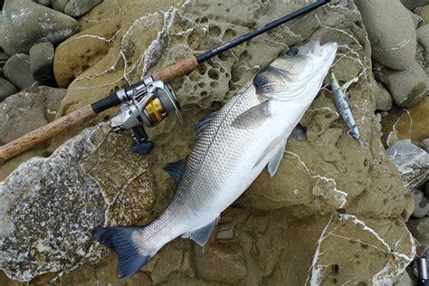 spinning in porto spinning in scogliera guida tecnica di pesca pesca