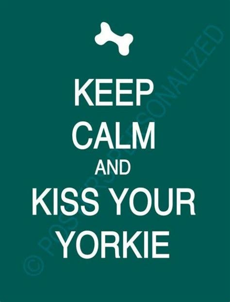 when do yorkie puppies calm 45 best yorkies mine is my images on yorkies terriers