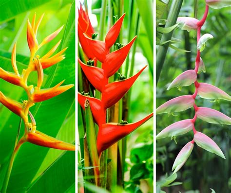 tropical names hawaiian flower names and meanings simple tropical