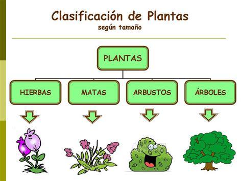 olguchiland las plantas ii aprendiendo juntos
