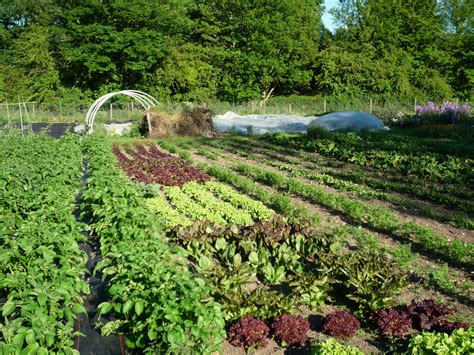 Vegetable Beds The King Of Crop Rotations Wildflowerhour