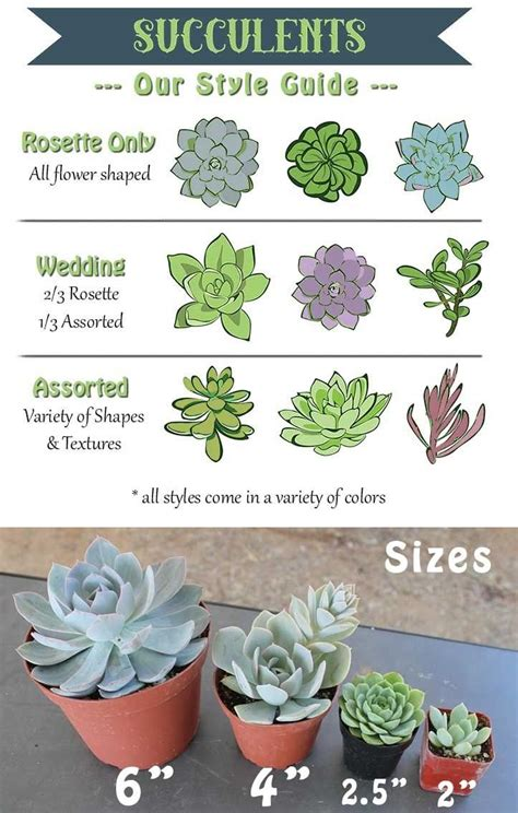 rosette wedding assorted  succulents
