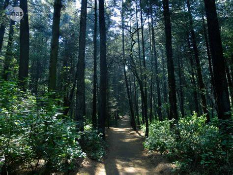 nienhagen wood alemanha el ocotal un bosque encantado para correr