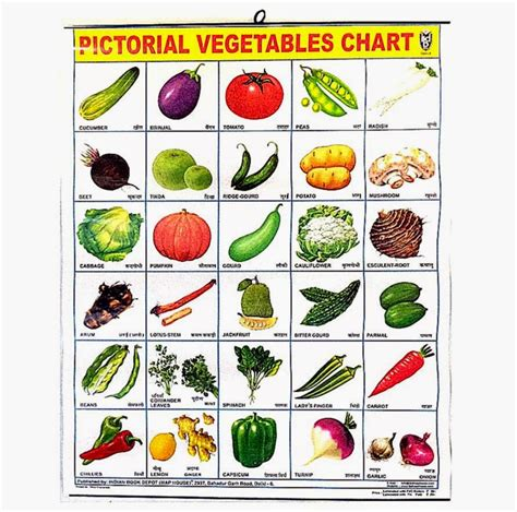 6 vegetables name in the gallery for gt vegetable name list in