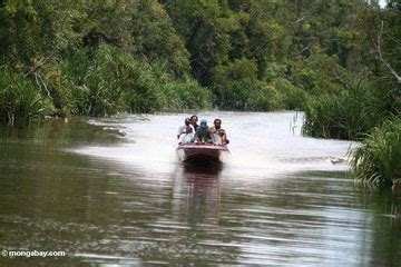 Minyak Kelapa Per Liter Tahun save the animal and flora in borneo island