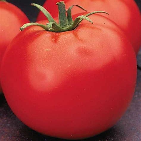 Celebrity Tomato Seeds   Hybrid Tomato Seeds   Buy Tomato