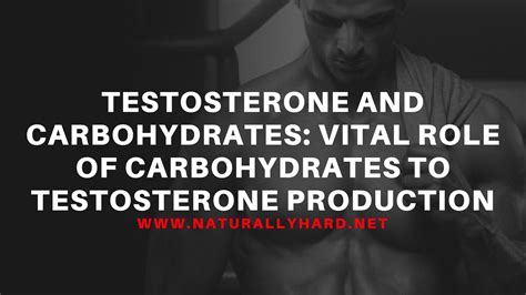 carbohydrates testosterone testosterone and carbohydrates vital of