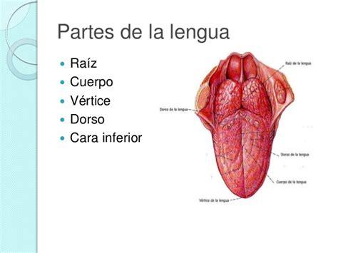 la lengua de los lengua