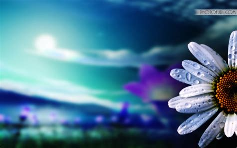 wallpaper free new latest colorful flowers wallpapers free wallpapers